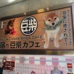 今大人気の原宿乃豆柴カフェ 実際に行ってきました