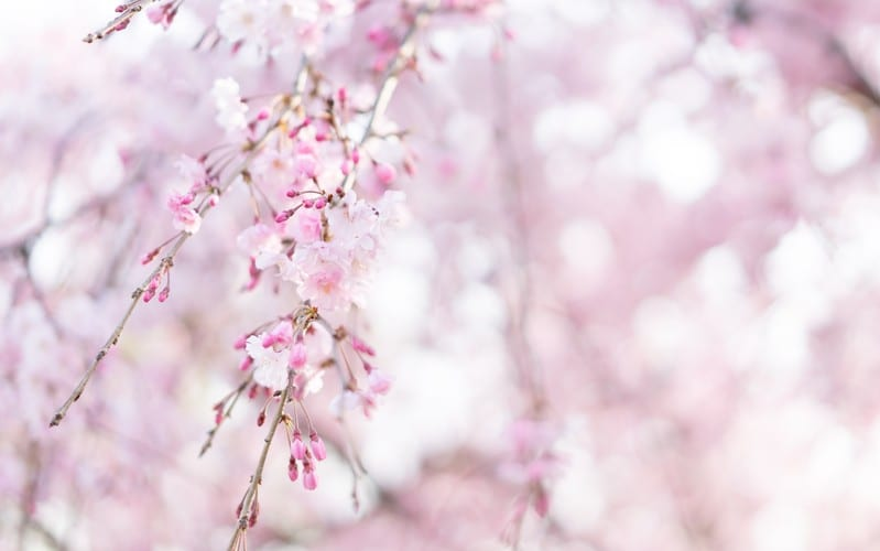 【お花見】目黒川へのアクセスや地図、天気情報