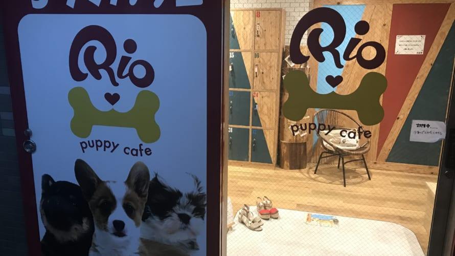 下北沢 子犬カフェRIO(リオ) 豆柴カフェとの違いを検証してきました