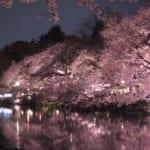 【お花見まとめ】東京都内のお花見スポットへのアクセス・天気予報・気温情報など